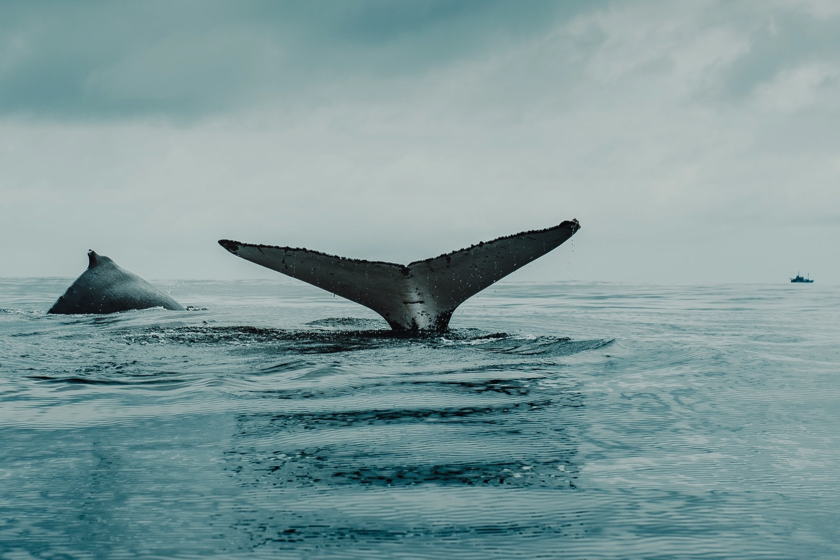 Whale Watching - From the shore or boat tours, whale watching is here!