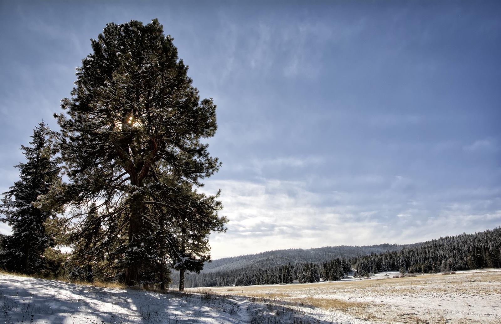 Vesper+Meadow+winter+afternoon+1600_DSC0150.jpg