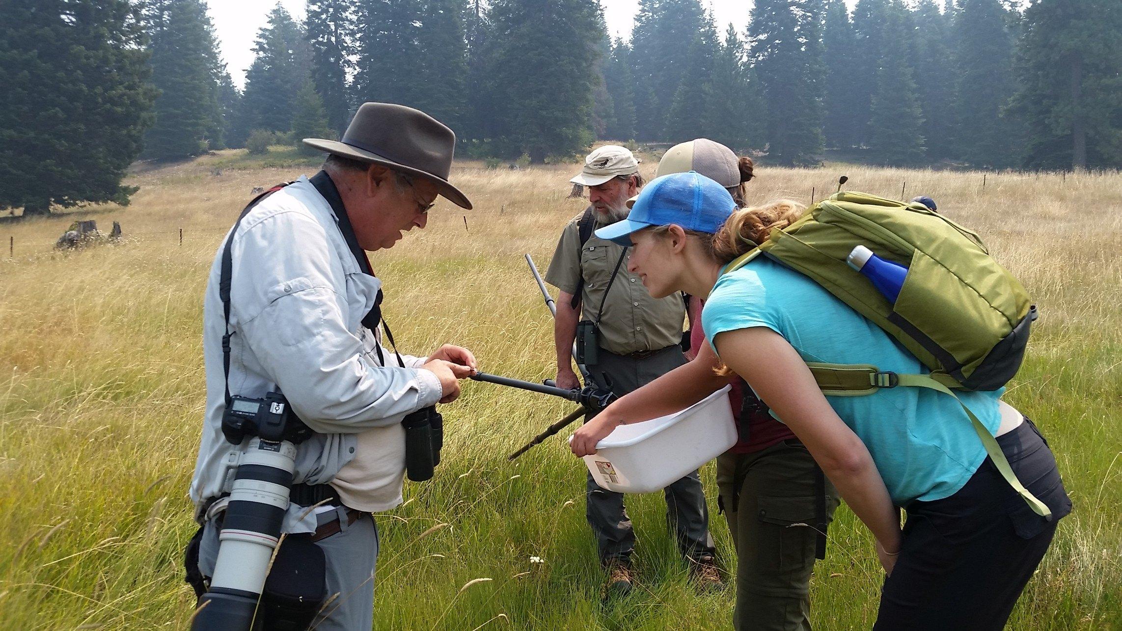 Dragonfly-Cascade-Siskiyou-Community-Science