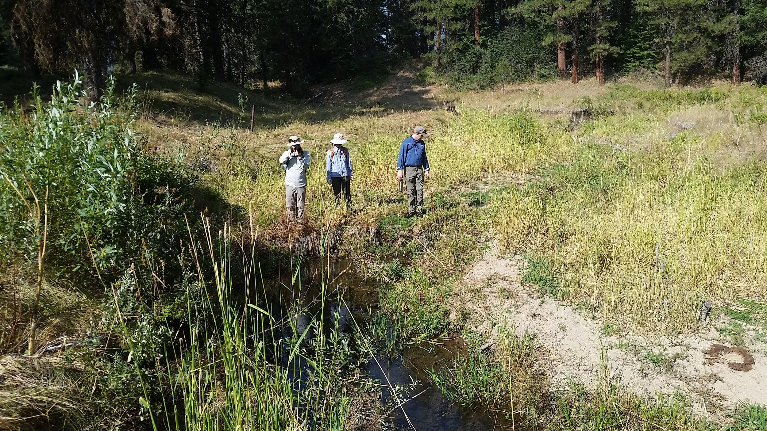 Creek and water quality surveying with the public - To study the biodiversity of the creek, and understand the health of the water, initial surveys were made in 2018 prior to any restoration efforts. Baseline information was collected on three biotic components of the meadow prior to restoration 1.) stream morphology 2.) macroinvertebrate community structure as an indication of stream habitat integrity 3.) and water quality. Read about Crystal Nichols's research on our blog!