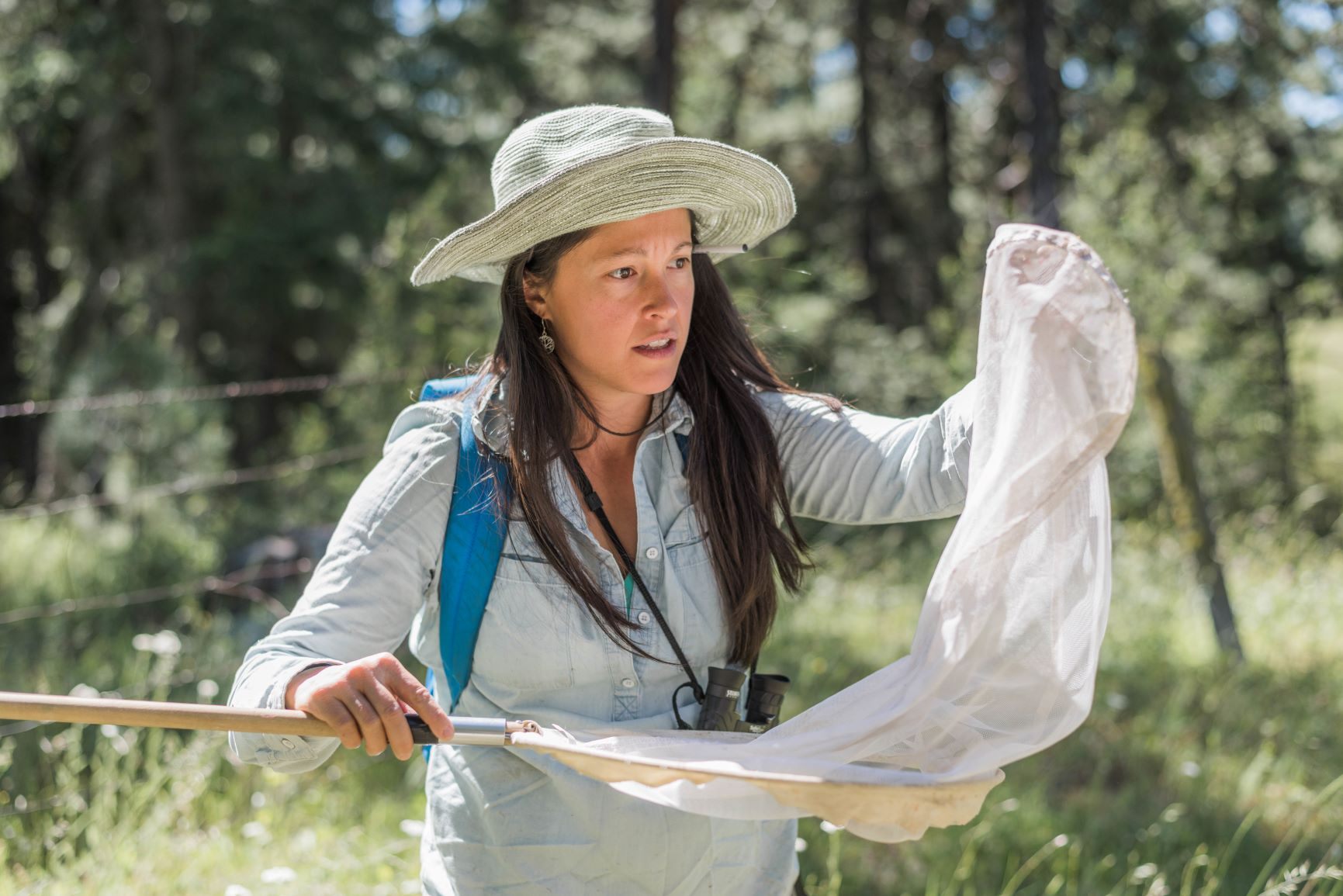 Shortly after the change of landownership, late June 2018, Program Director Jeanine Moy coordinated a small group of biologists for the first meadow survey for plants, birds, and pollinators at Vesper Meadow. Since then we have cataloged over 230 species of plants, over 70 species of birds, and over 30 species of pollinators (and counting!). This April - September 2019 will be the first full warm season for collecting baseline biological information.