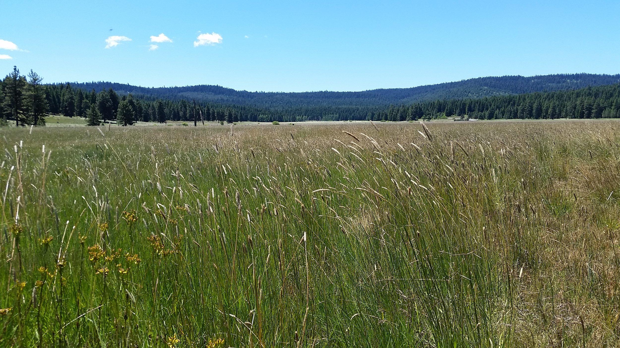 Vesper-Meadow-view