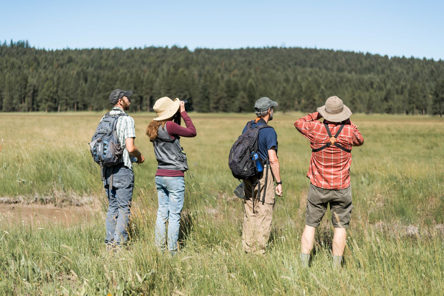 volunteer-bird-monitoring-KBO-Vesper-Meadow