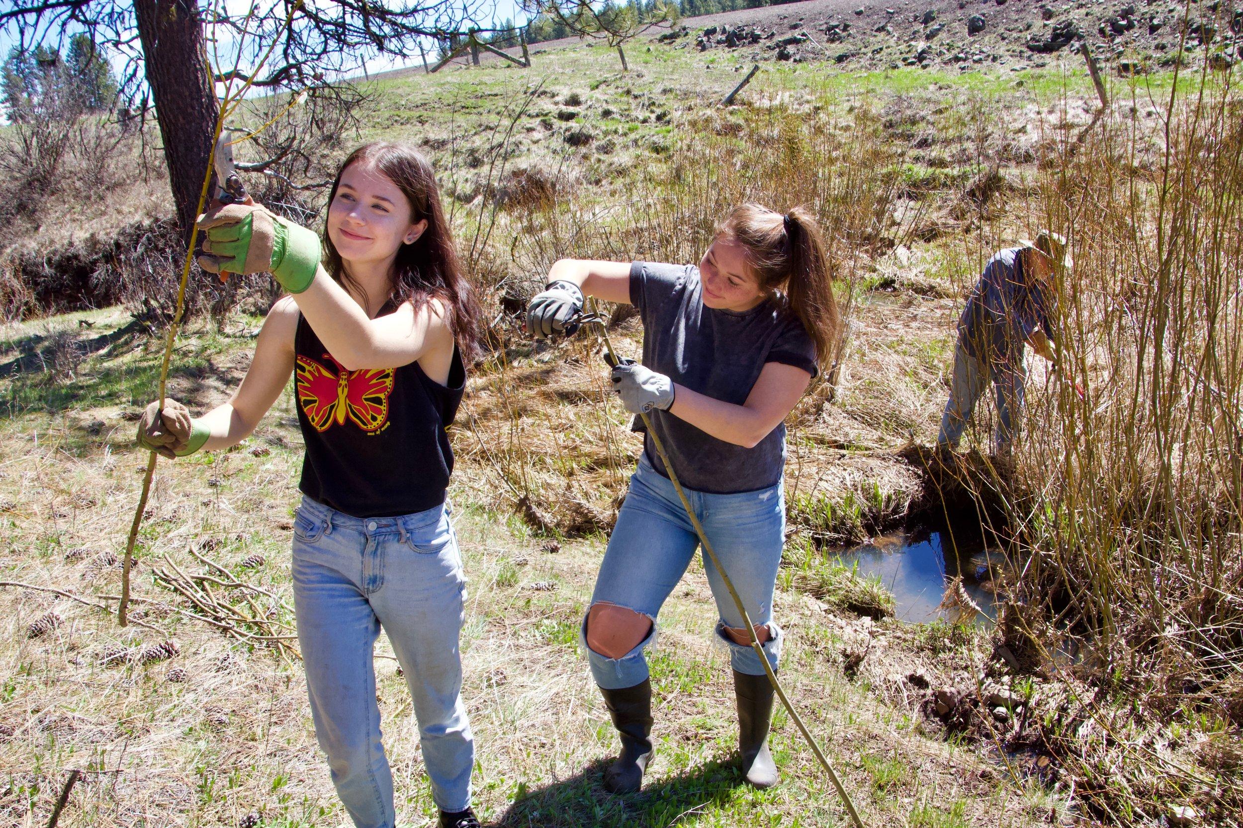 Preparing willow for planting, April 2019. Photo by Linda Thomas