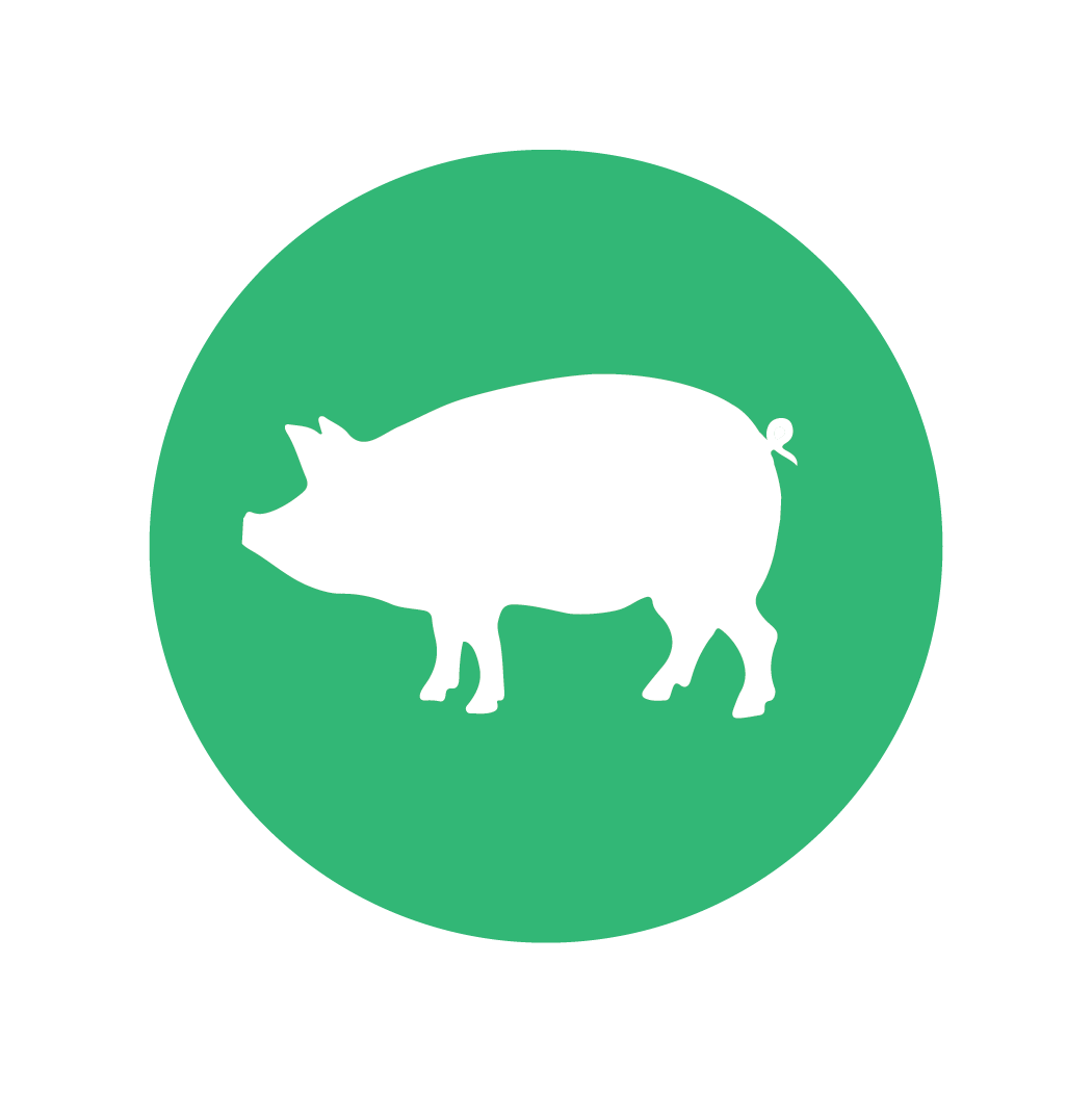 Illustrations_pigs.png