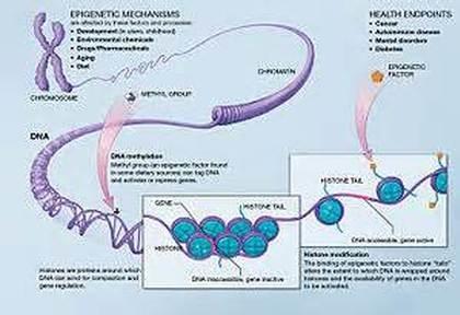 Epigenetics1.jpg