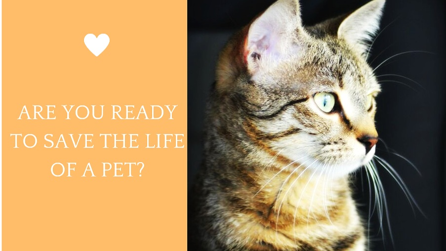 What if you could learn a set of skills that could help a pet by:    LESSENING PAIN FROM AN INJURY    SPEEDING UP HEALING OF A WOUND    REDUCING COST OF VETERINARY INTERVENTION    SAVING THEIR LIFE