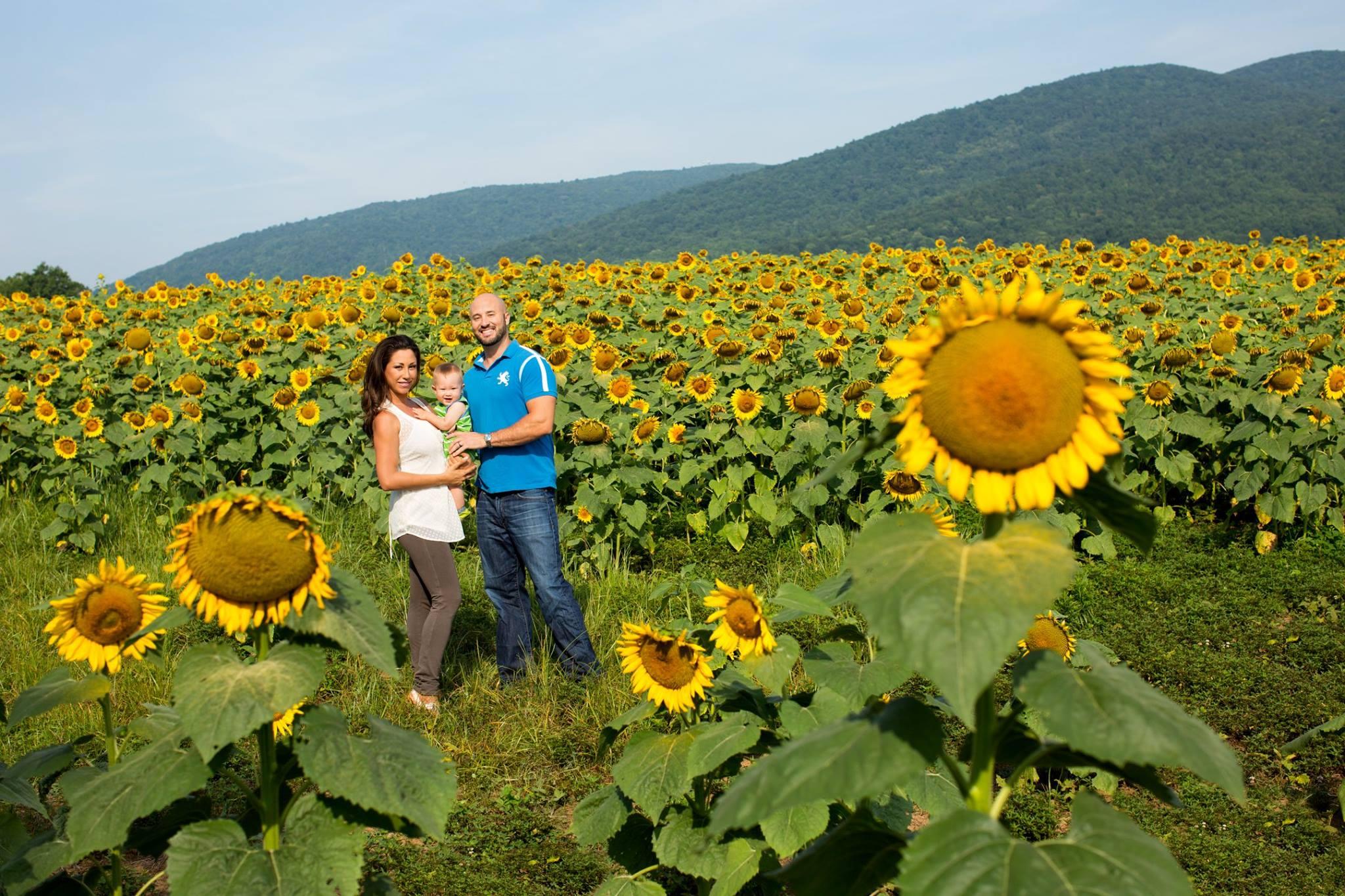 AWP_Sunflowers.jpg