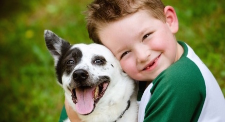 Pet Shelters and Veterinary Science