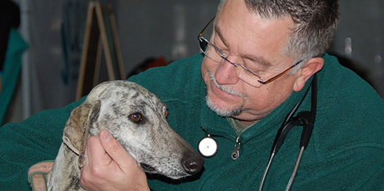 dr-couto-greyhound.jpg