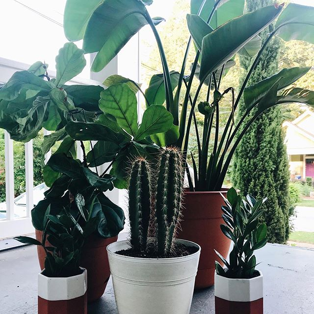 these little babies got too big for their britches. . . and repotting a cactus is as terrible as you might think.