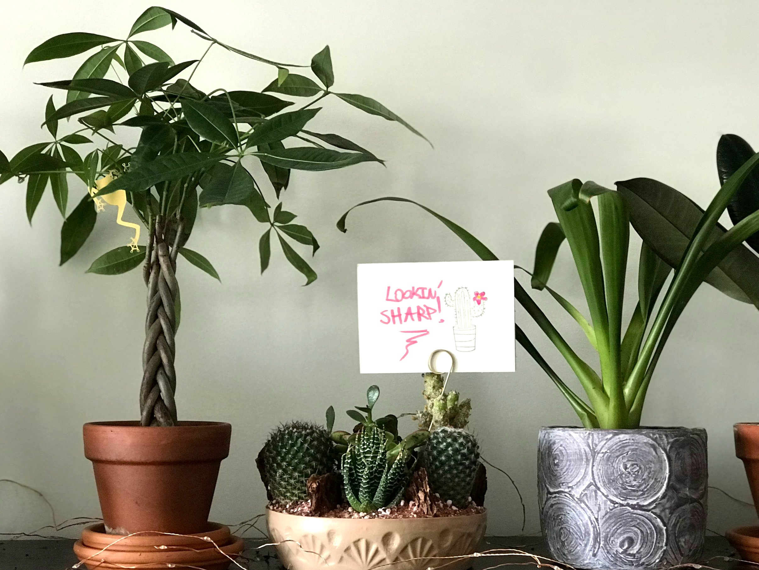 I love my cute monkey charm in my money plant, and I love to show my cacti gang some love!