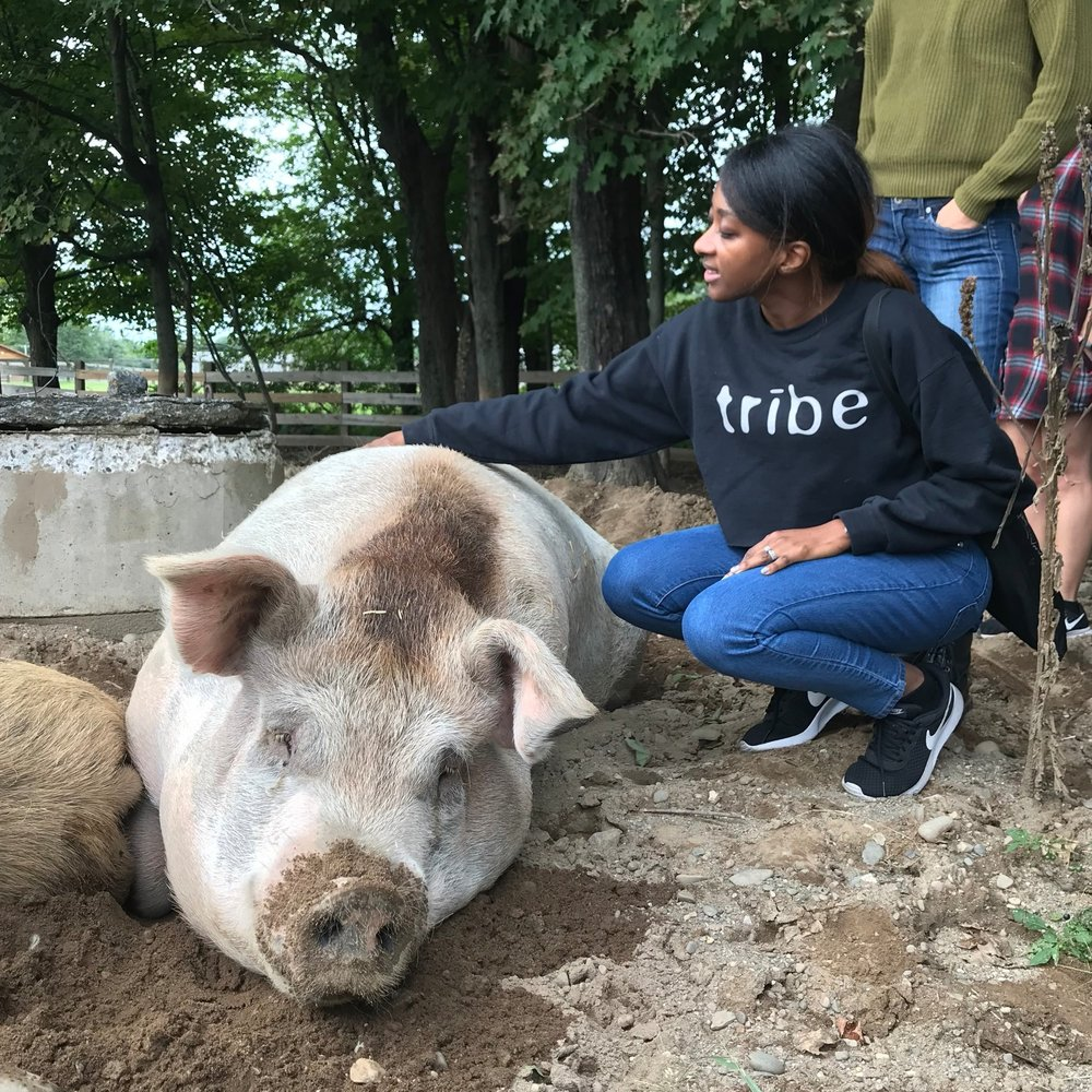 My first visit to an animal sanctuary in upstate New York called    Woodstock Animal Sanctuary   .