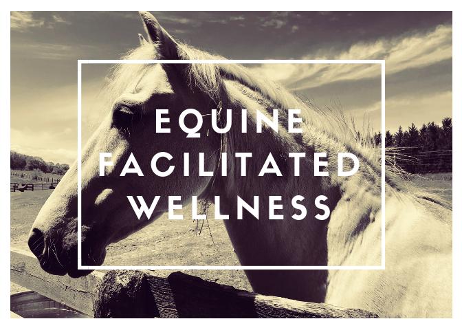 equinefacilitatedwellness1.png