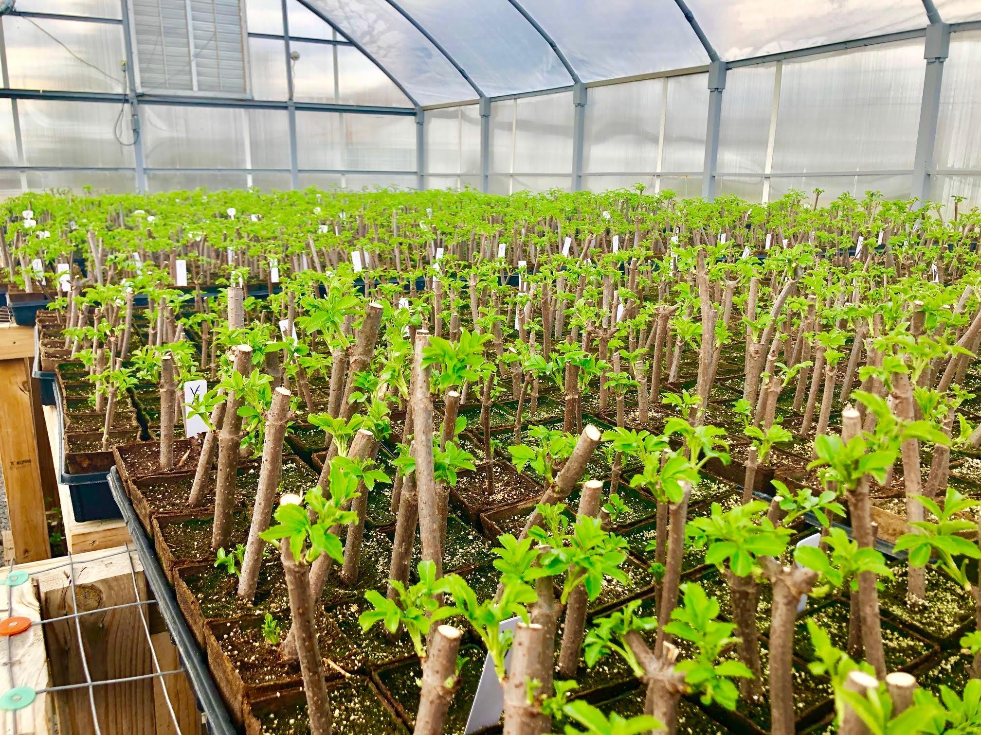 elderberry-greenhouse.jpg