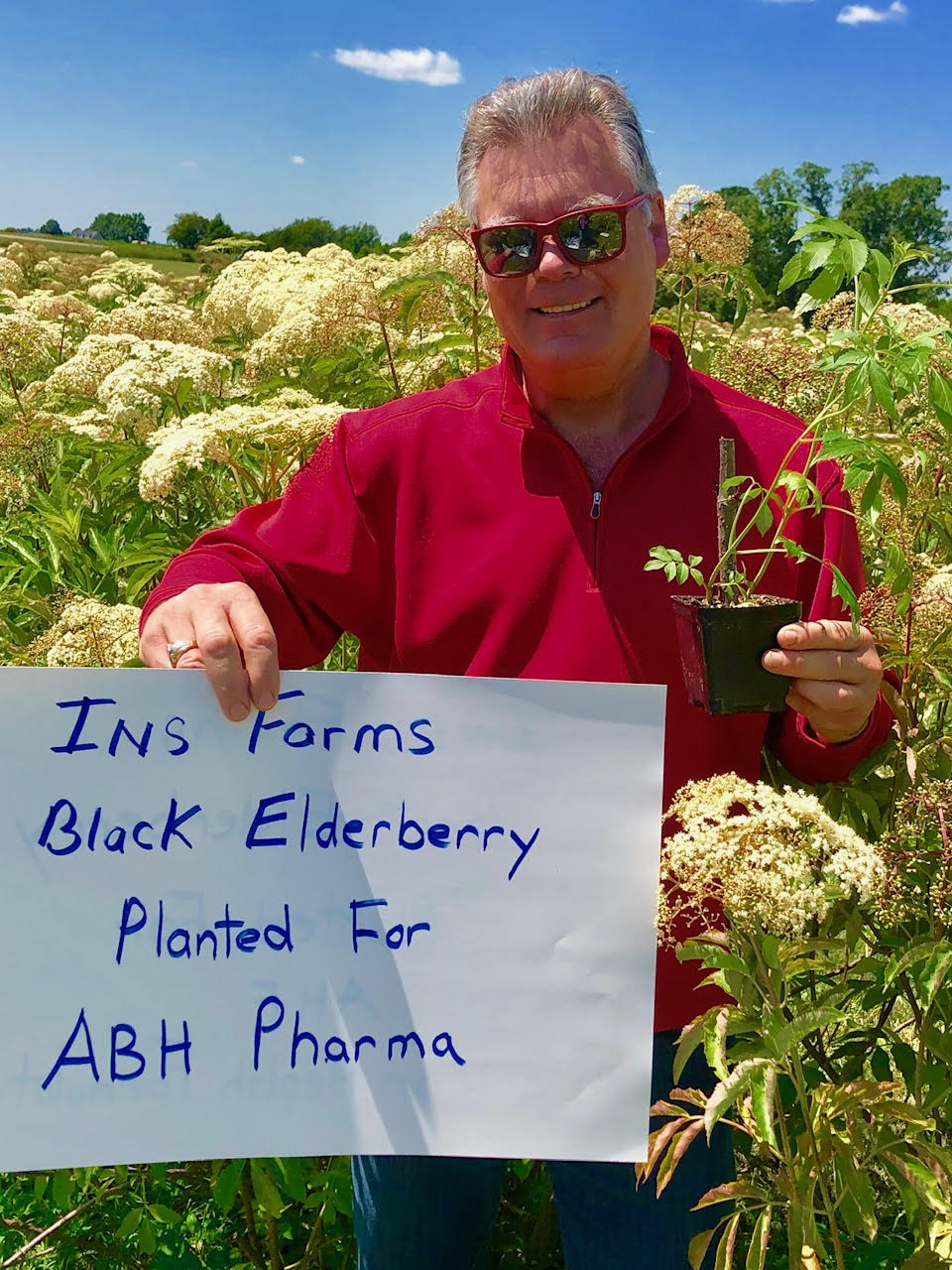 Plant-Elderberry-ABH-Pharma.jpg