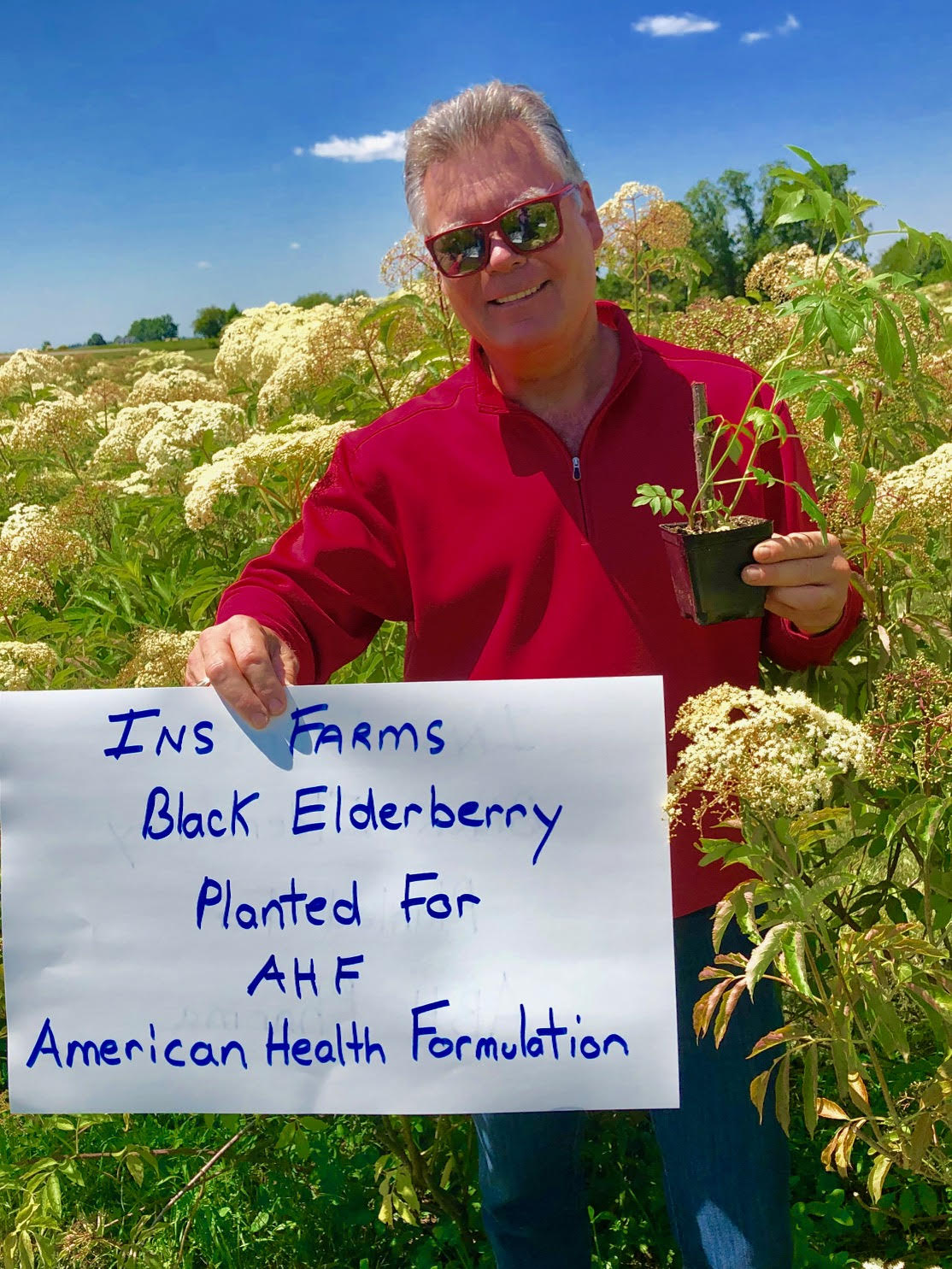Plant-Elderberry-American-Health-Formulation.jpg