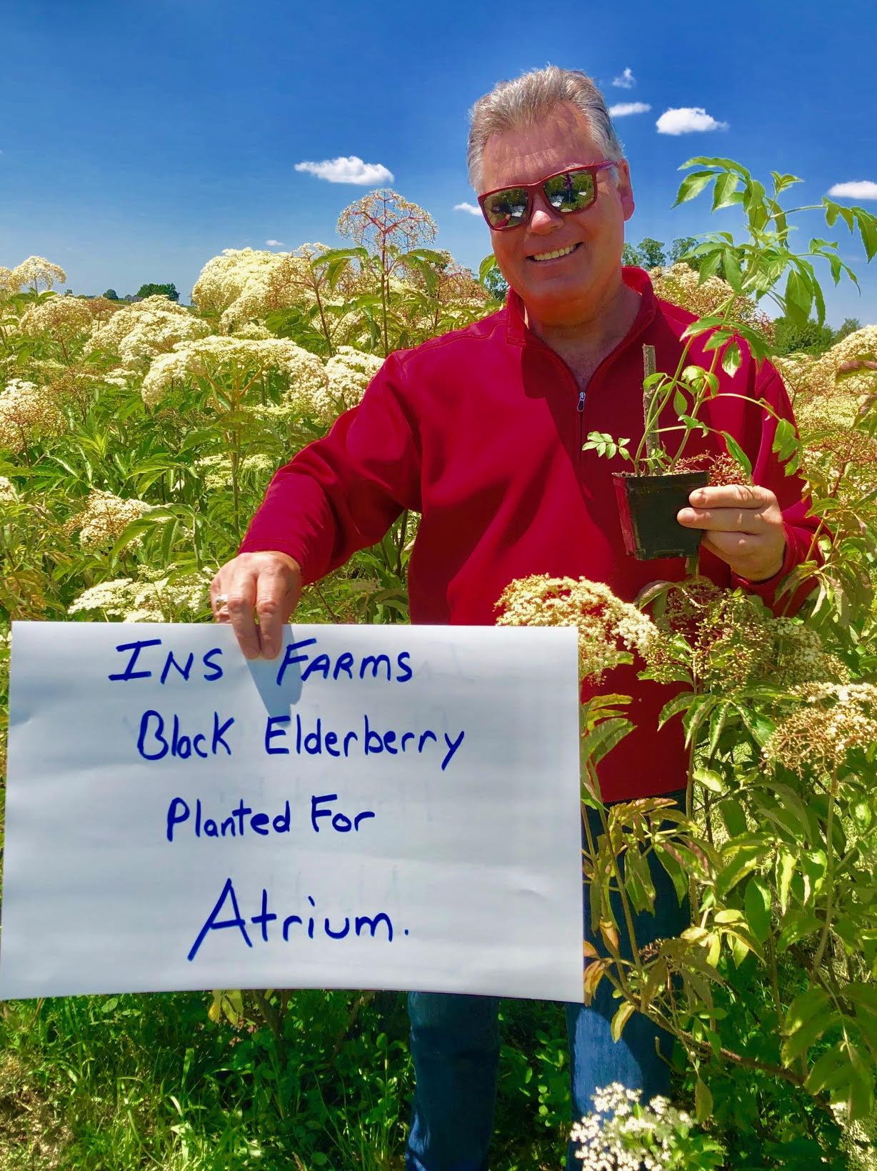 Plant-Elderberry-Atrium.jpg