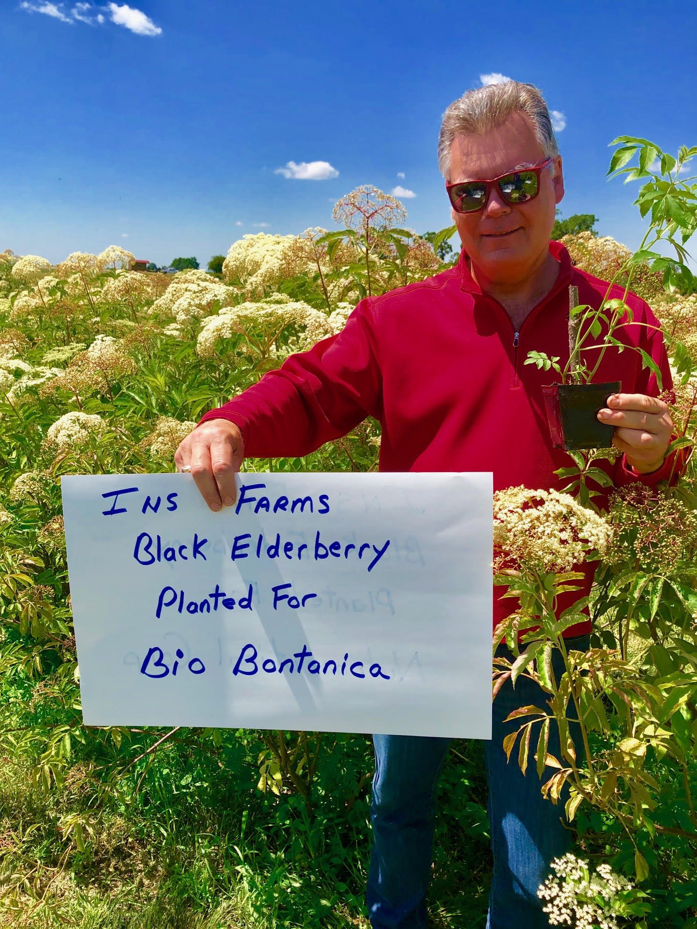 Plant-Elderberry-Bio-Botanica.jpg