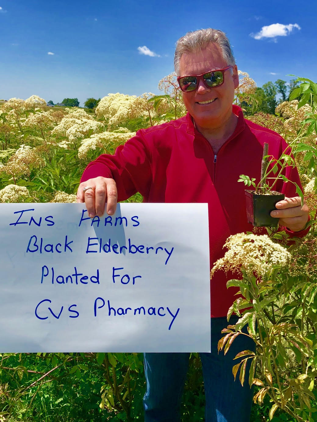 Plant-Elderberry-CVS-Pharmacy.jpg