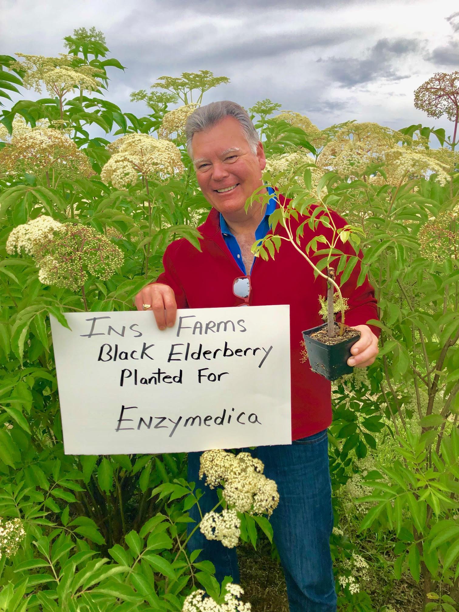 Plant-Elderberry-Enzymedica.jpg
