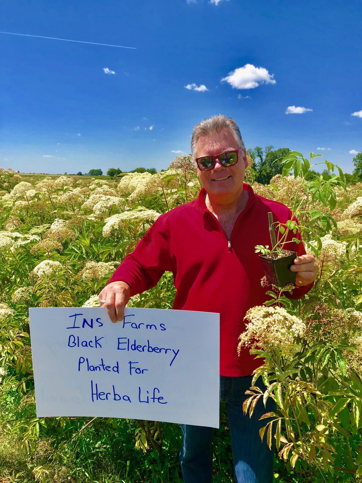 Plant-Elderberry-Herba-Life.jpg