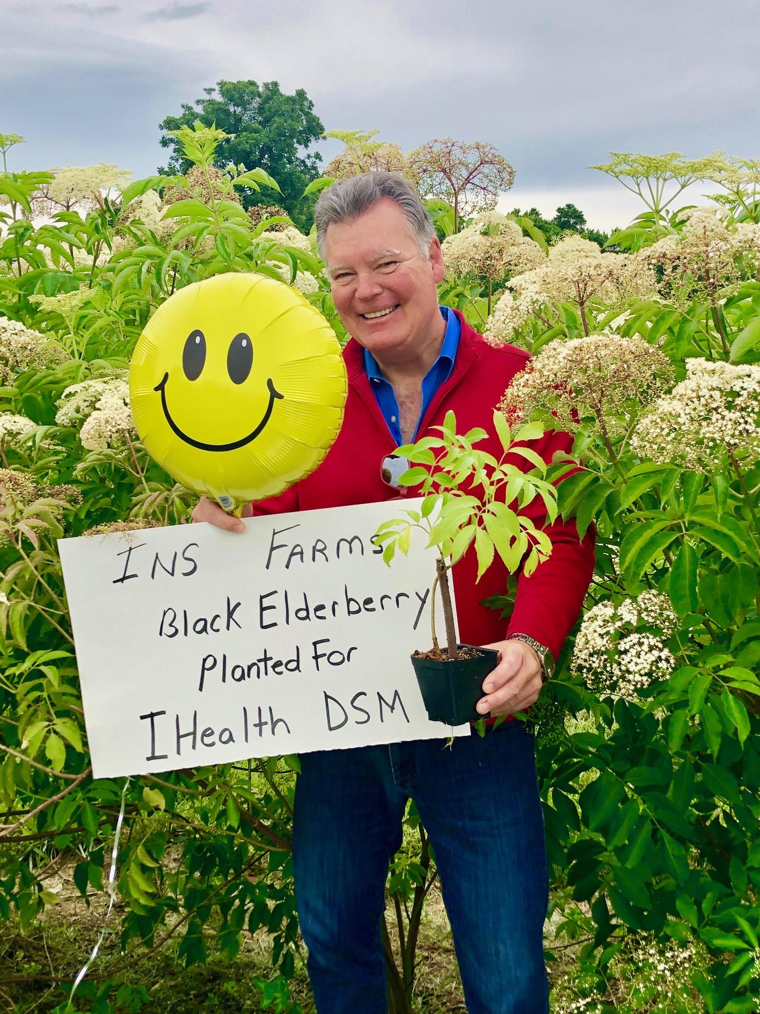 Plant-Elderberry-IHealth-DSM.jpg