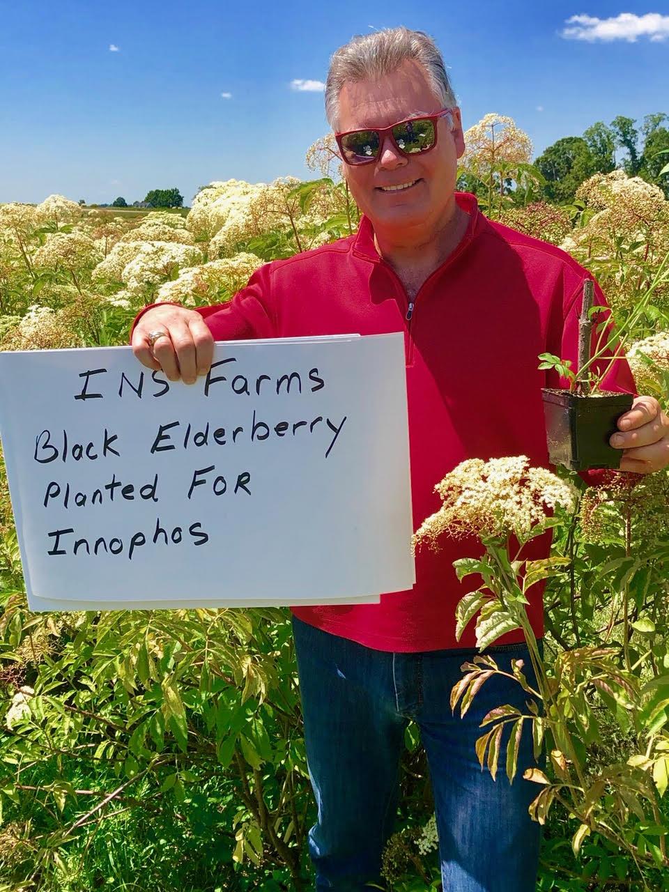 Plant-Elderberry-Innophos.jpg
