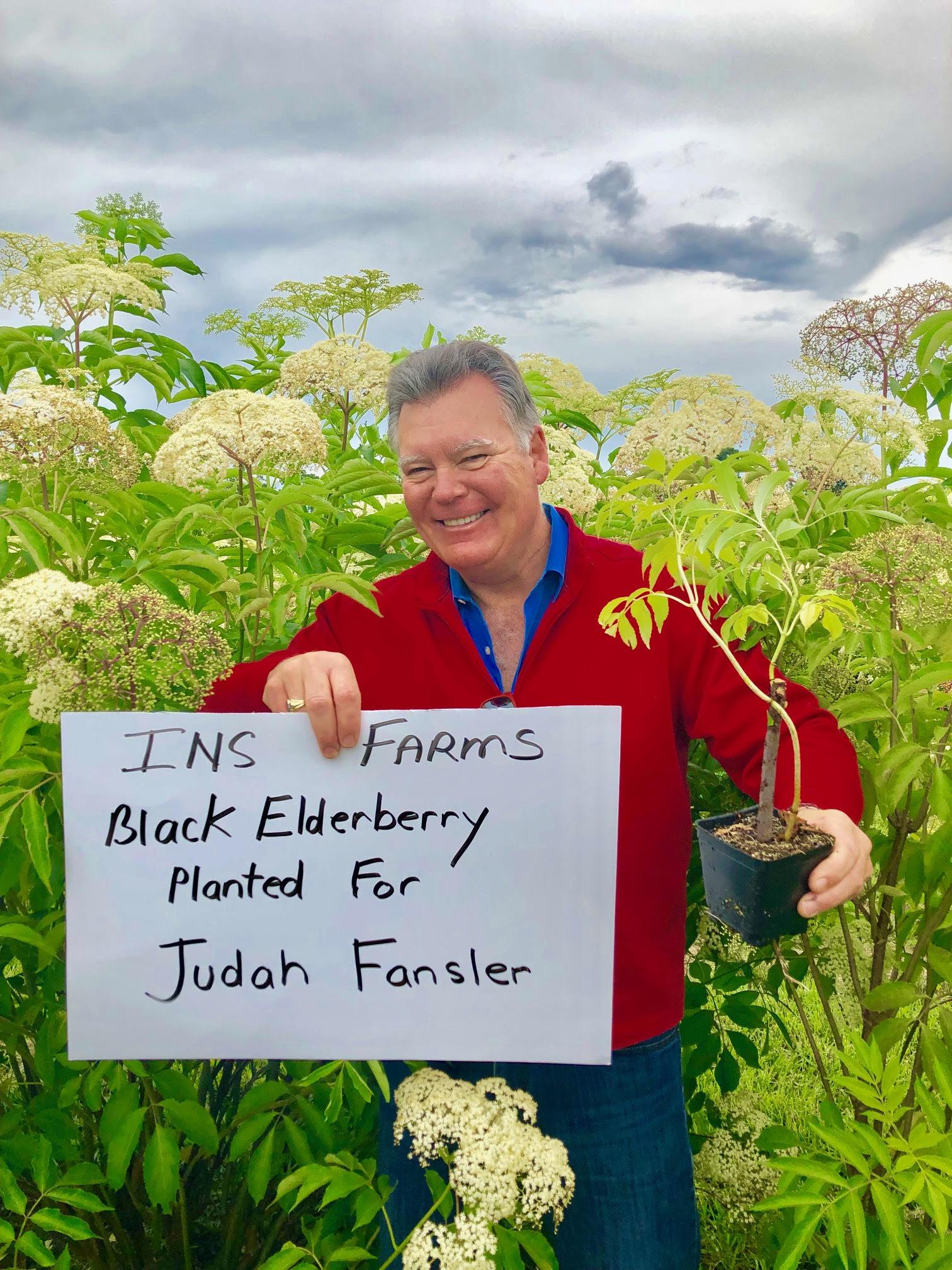 Plant-Elderberry-Judah-Fansler.jpg