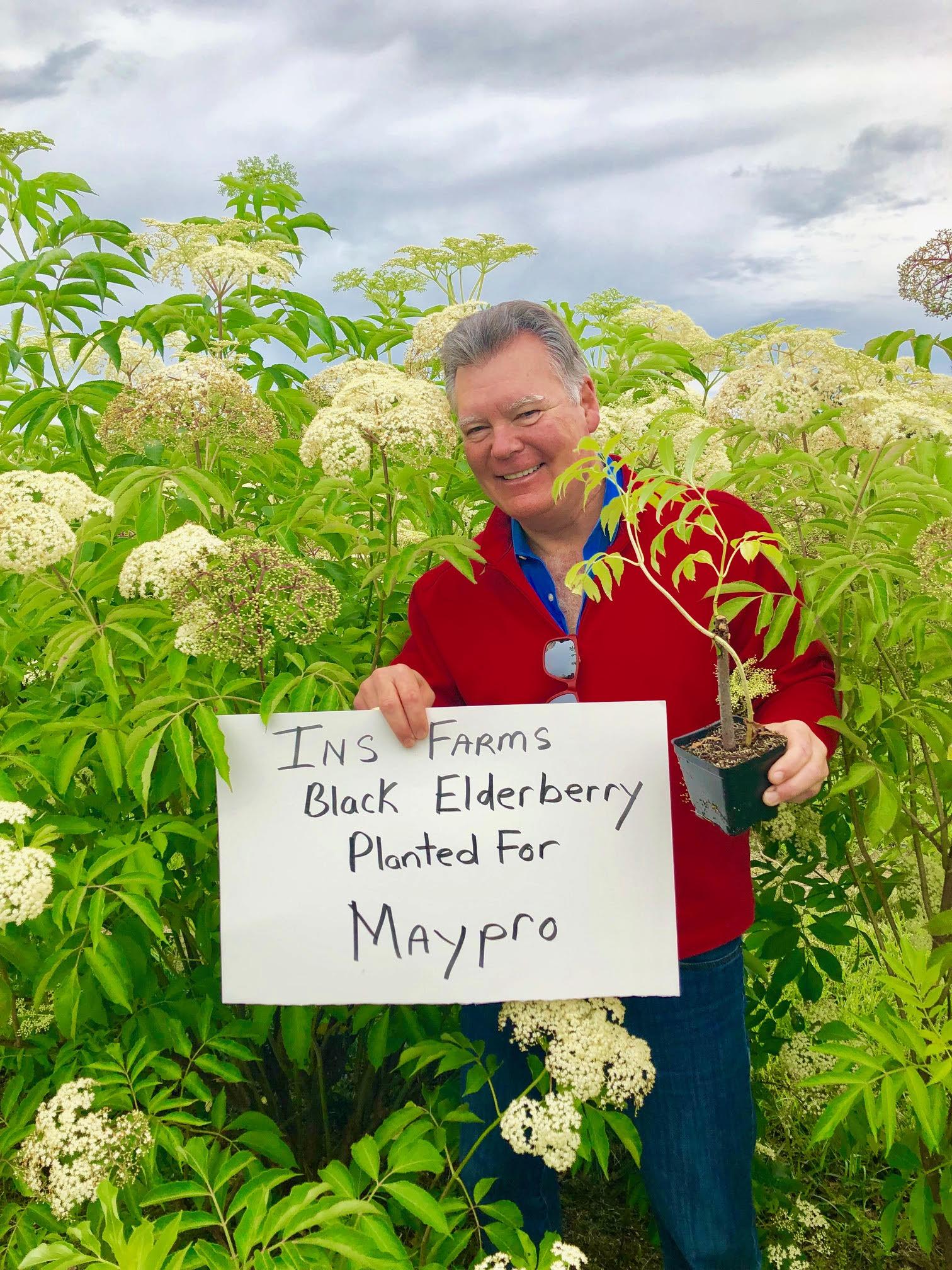 Plant-Elderberry-Maypro.jpg