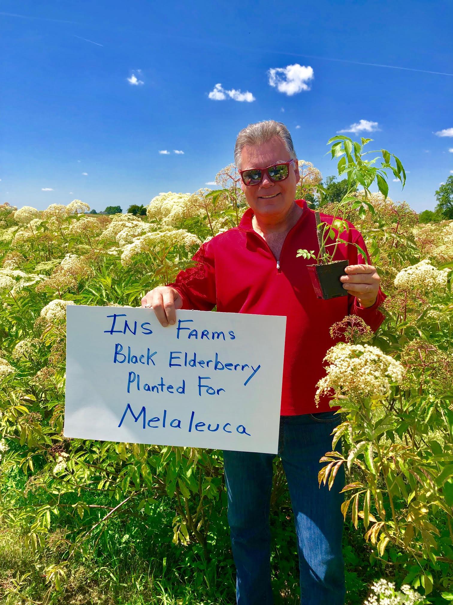Plant-Elderberry-Melaleuca.jpg