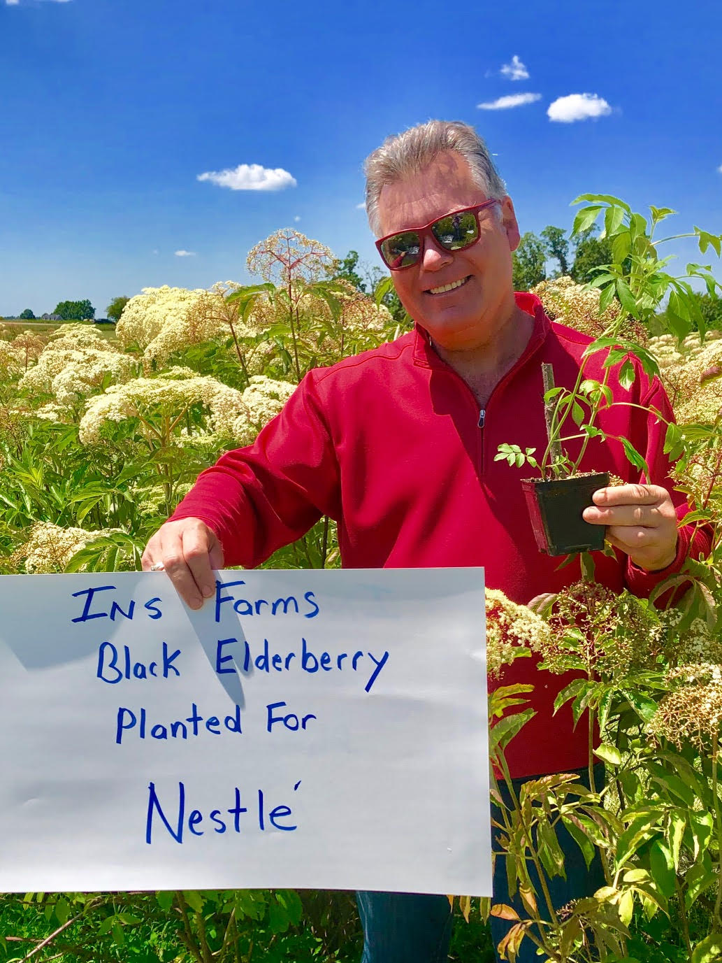 Plant-Elderberry-Nestle.jpg