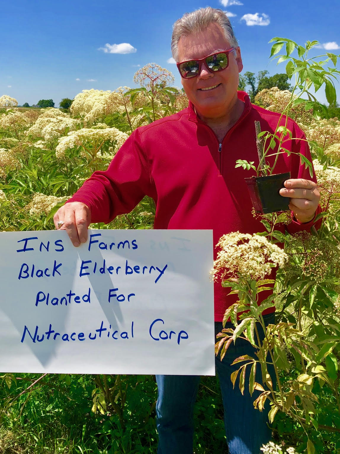 Plant-Elderberry-Nutraceutical-Corp.jpg