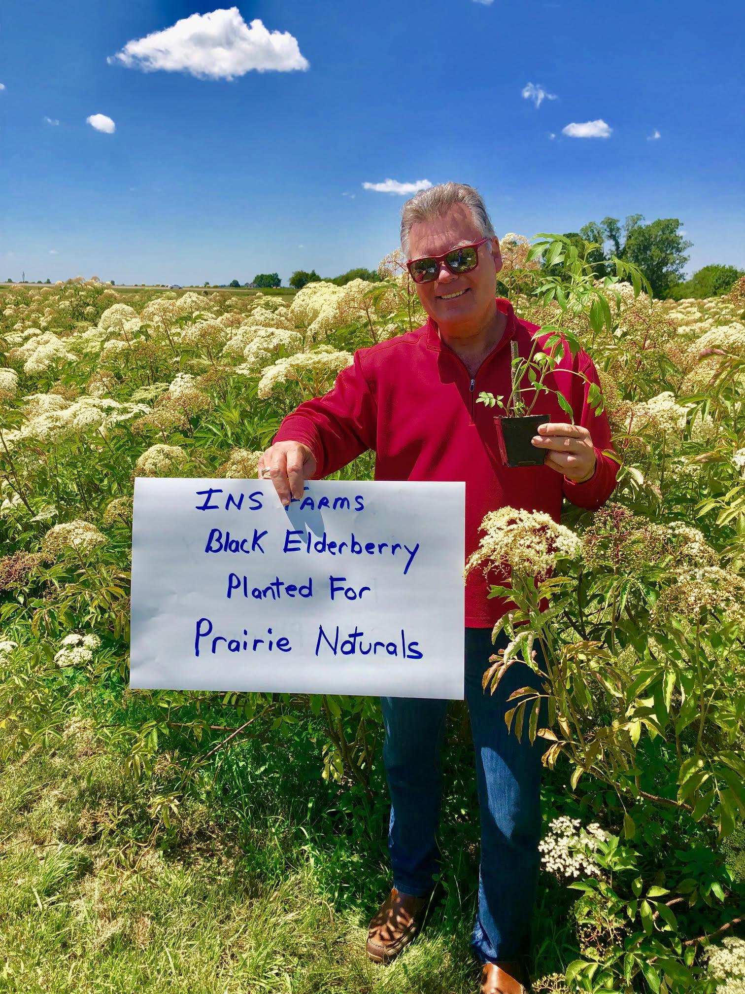 Plant-Elderberry-Prairie-Naturals.jpg
