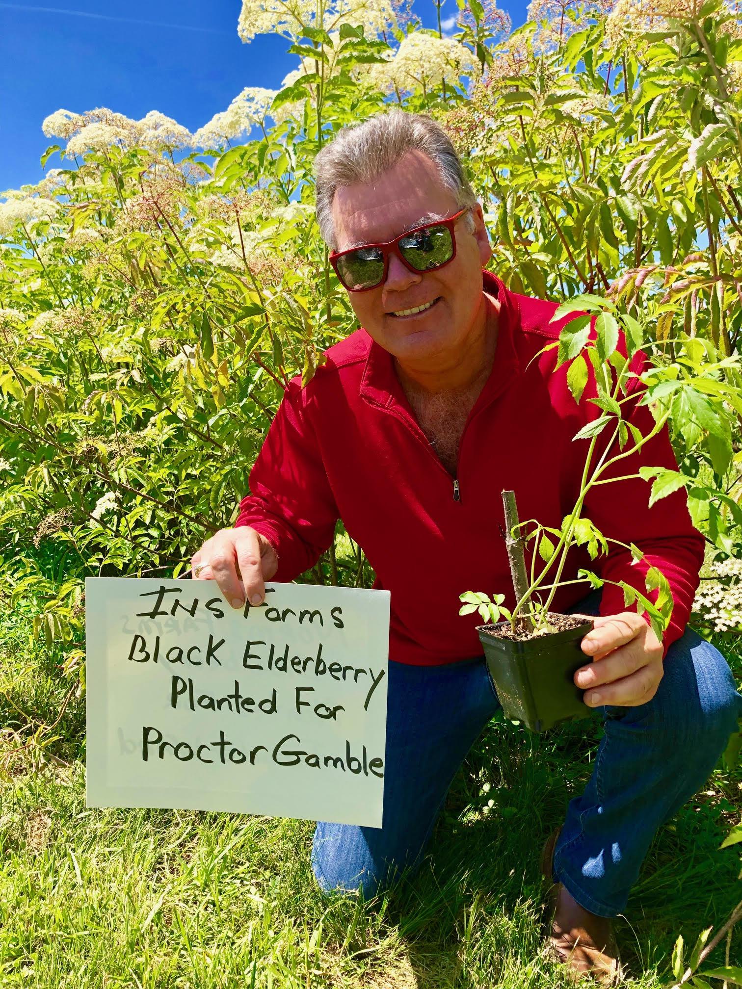 Plant-Elderberry-Proctor-Gamble.jpg