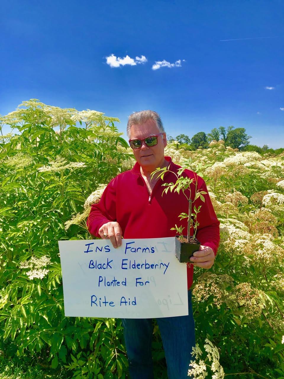 Plant-Elderberry-Rite-Aid.jpg