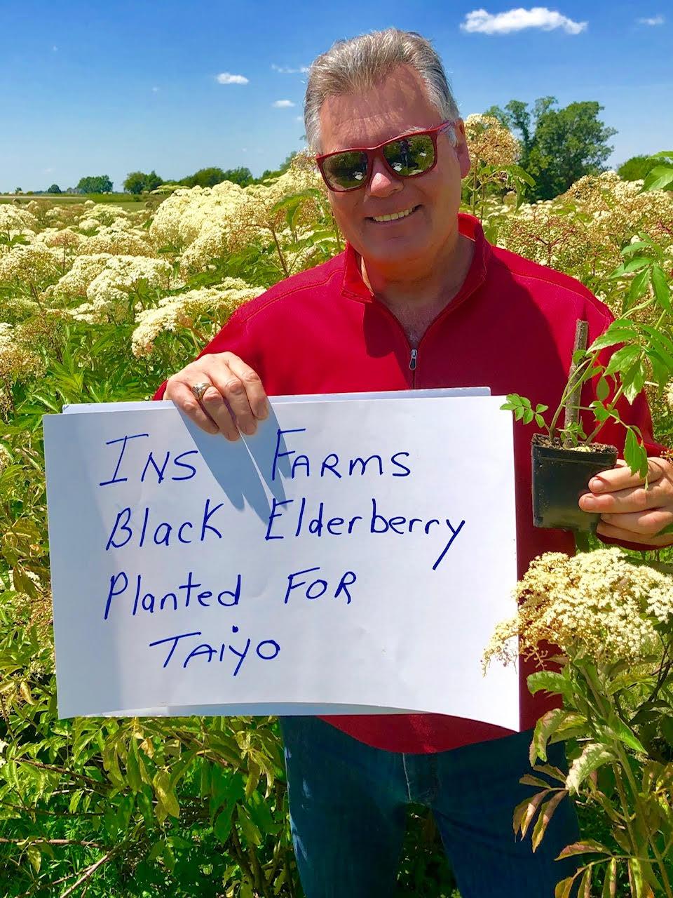 Plant-Elderberry-Taiyo.jpg