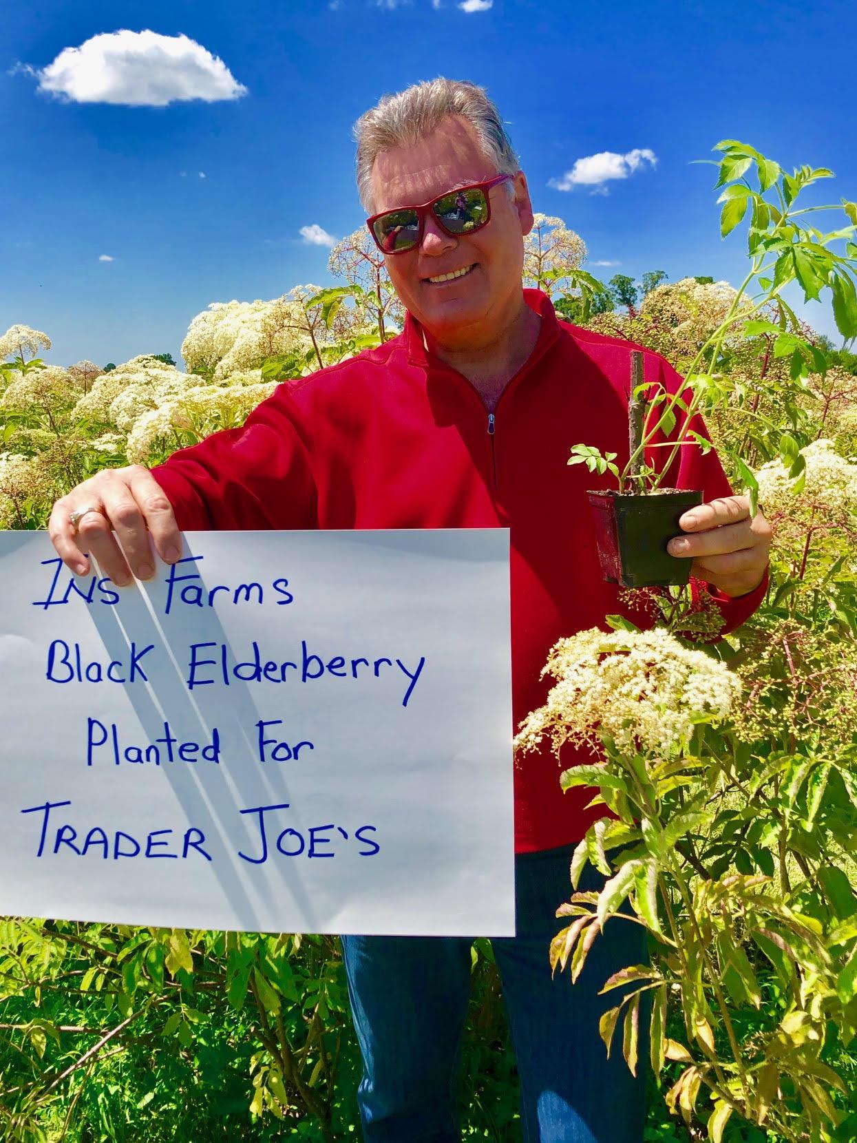 Plant-Elderberry-Trader-Joes.jpg