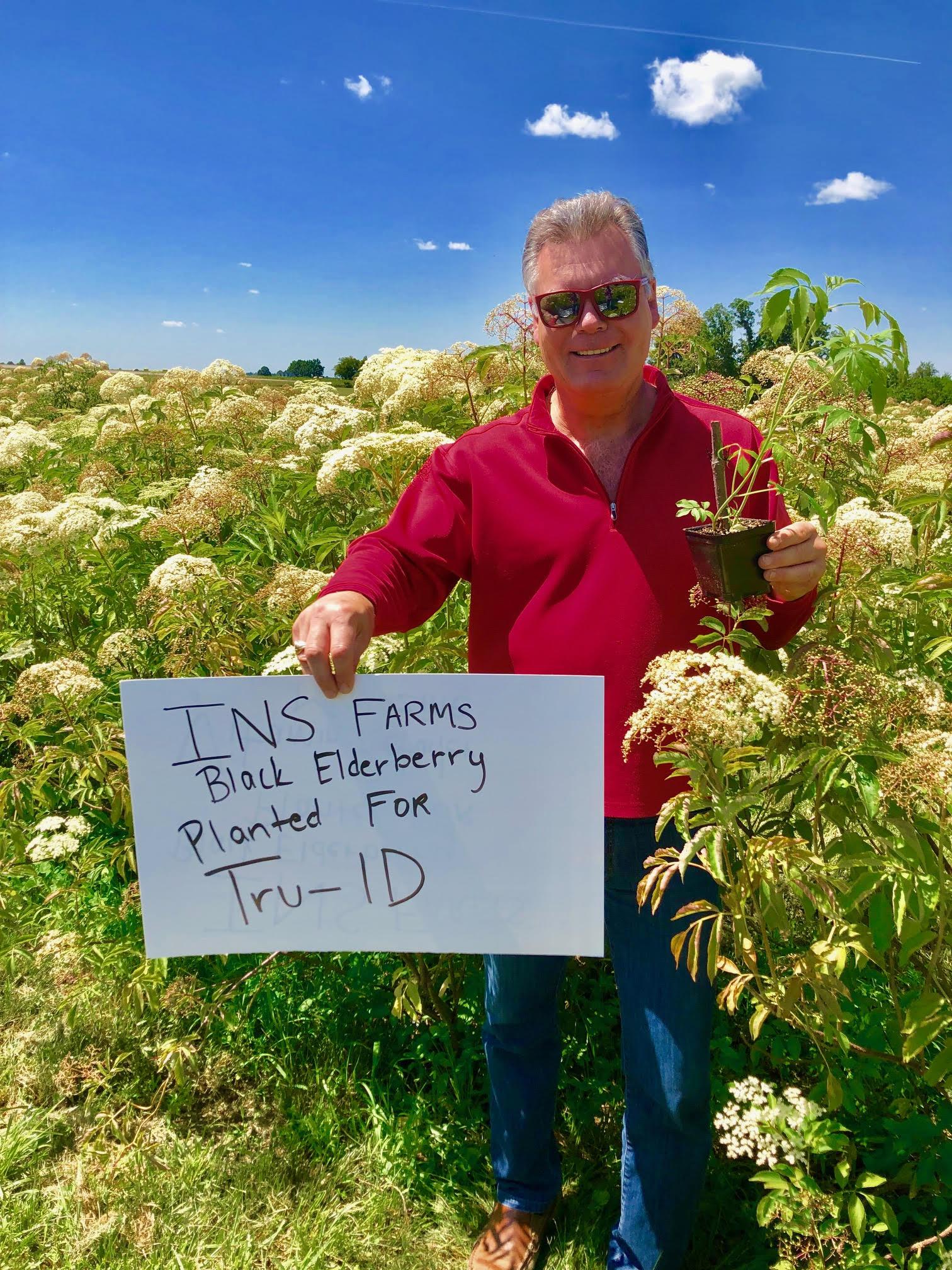 Plant-Elderberry-Tru-ID.jpg