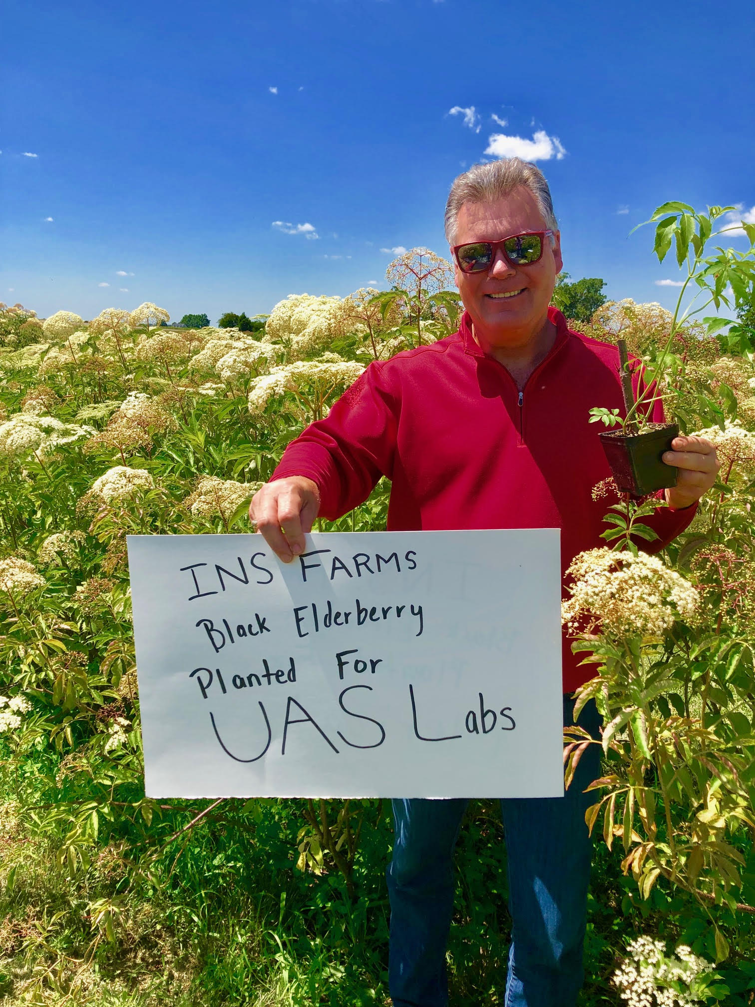Plant-Elderberry-UAS-Labs.jpg
