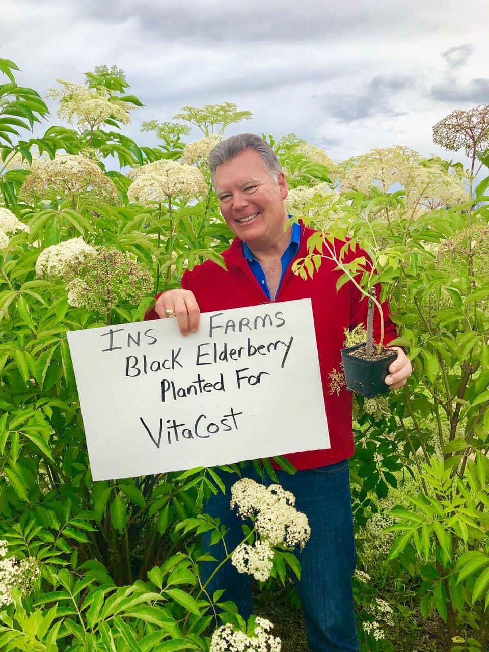 Plant-Elderberry-VitaCost.jpg