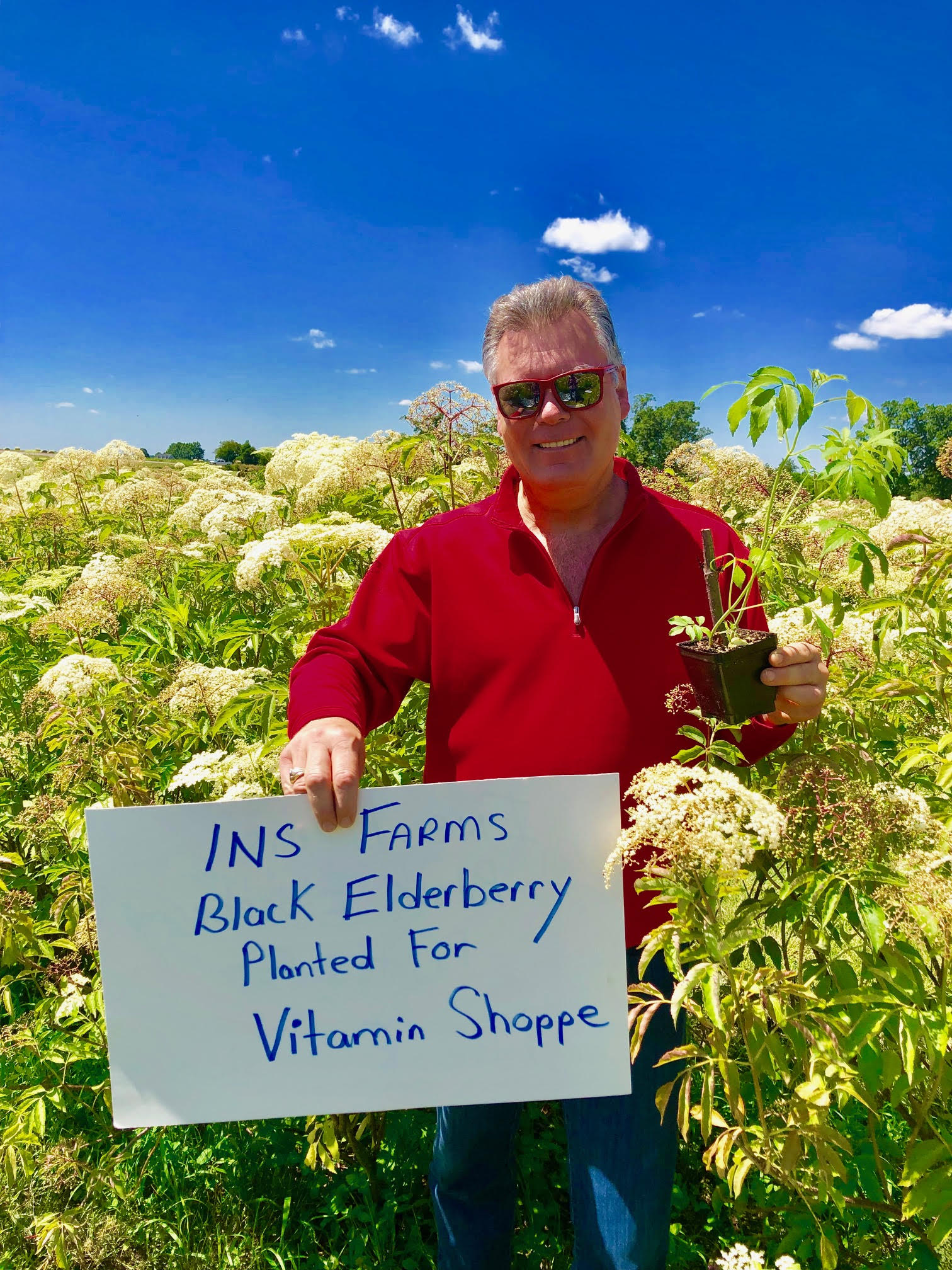 Plant-Elderberry-Vitamin-Shoppe.jpg