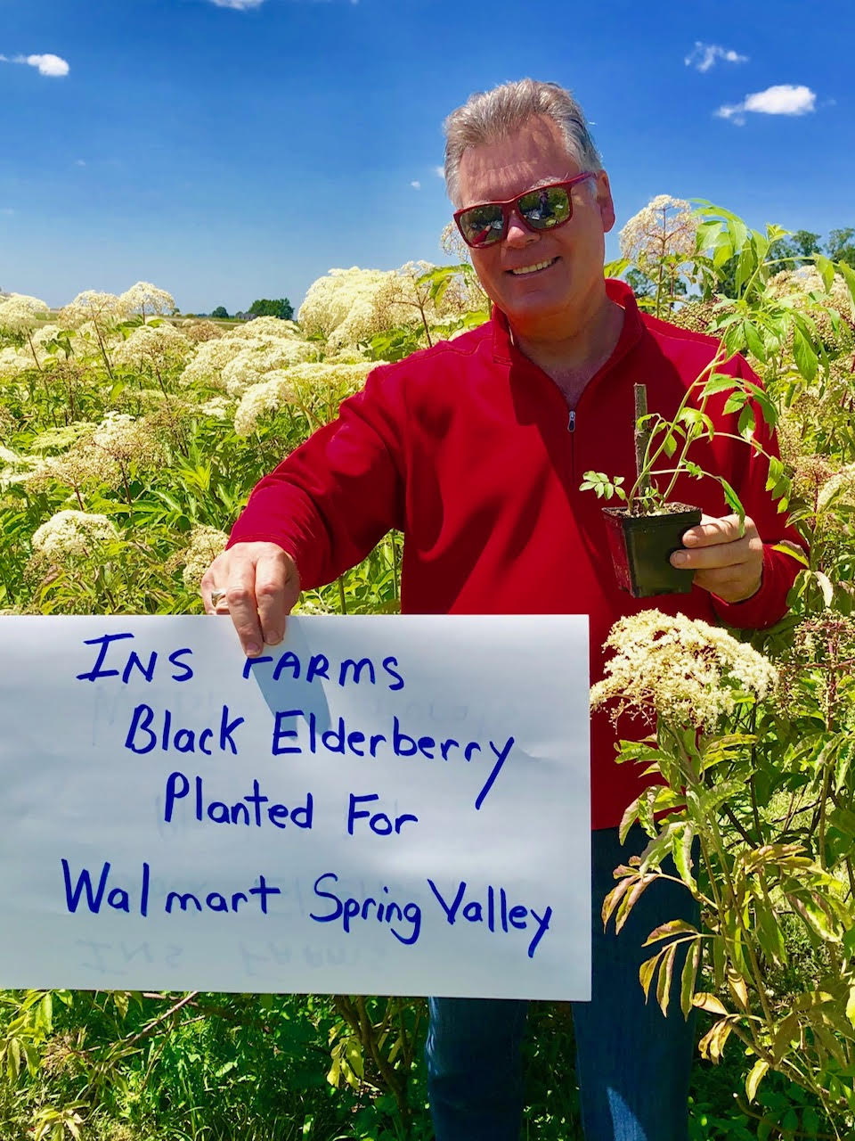 Plant-Elderberry-Walmart-Spring-Valley.jpg
