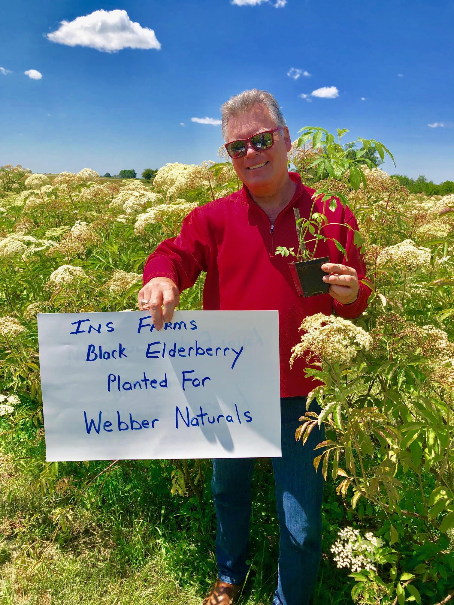 Plant-Elderberry-Webber-Naturals.jpg