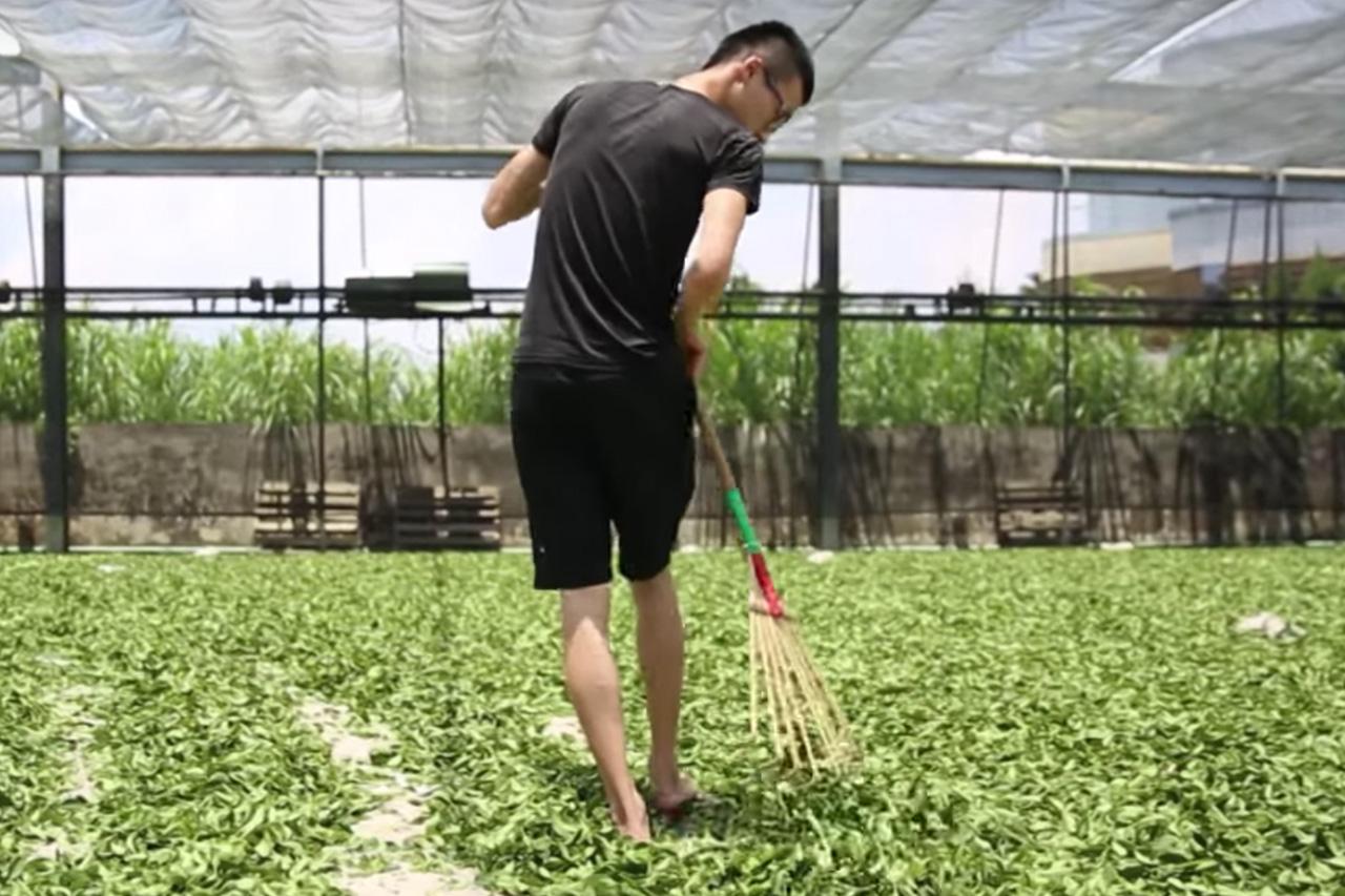 2-2-3_plant_tea.jpg