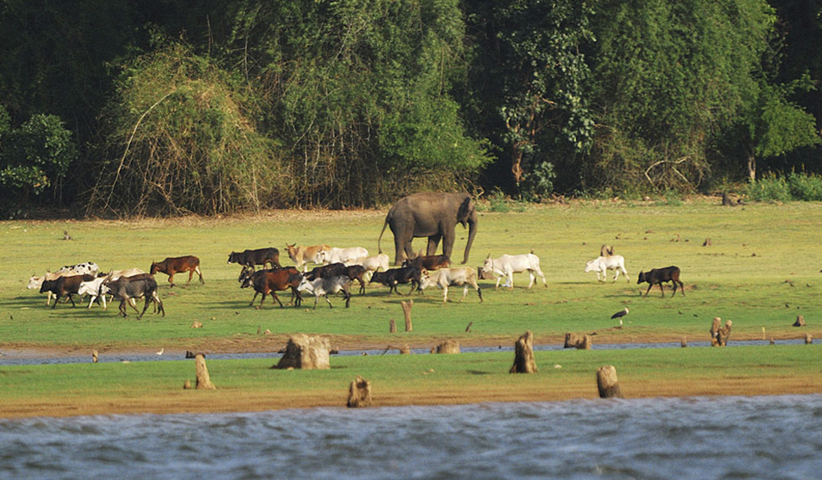 travelmg_Enjoy a unique combination of wildlife and culture in Coorg and Kabini.jpg