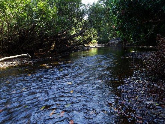 anshi national park karwar 7.jpg