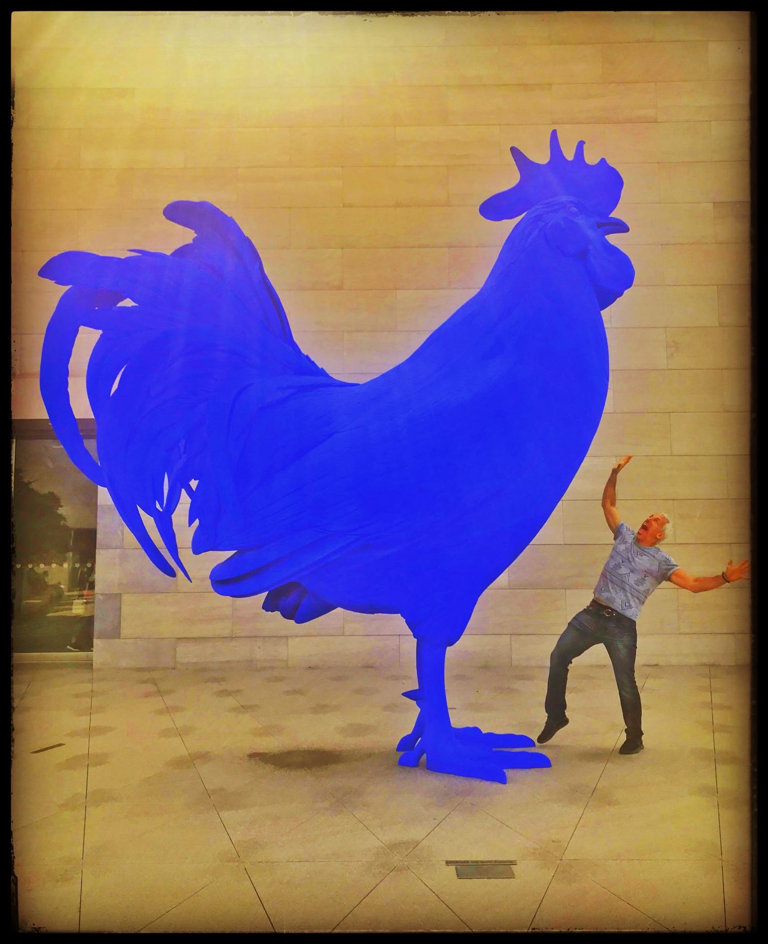 A Big Blue Cock