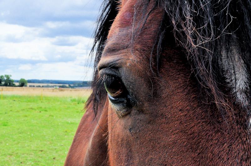 Tower House Horses 031.jpg