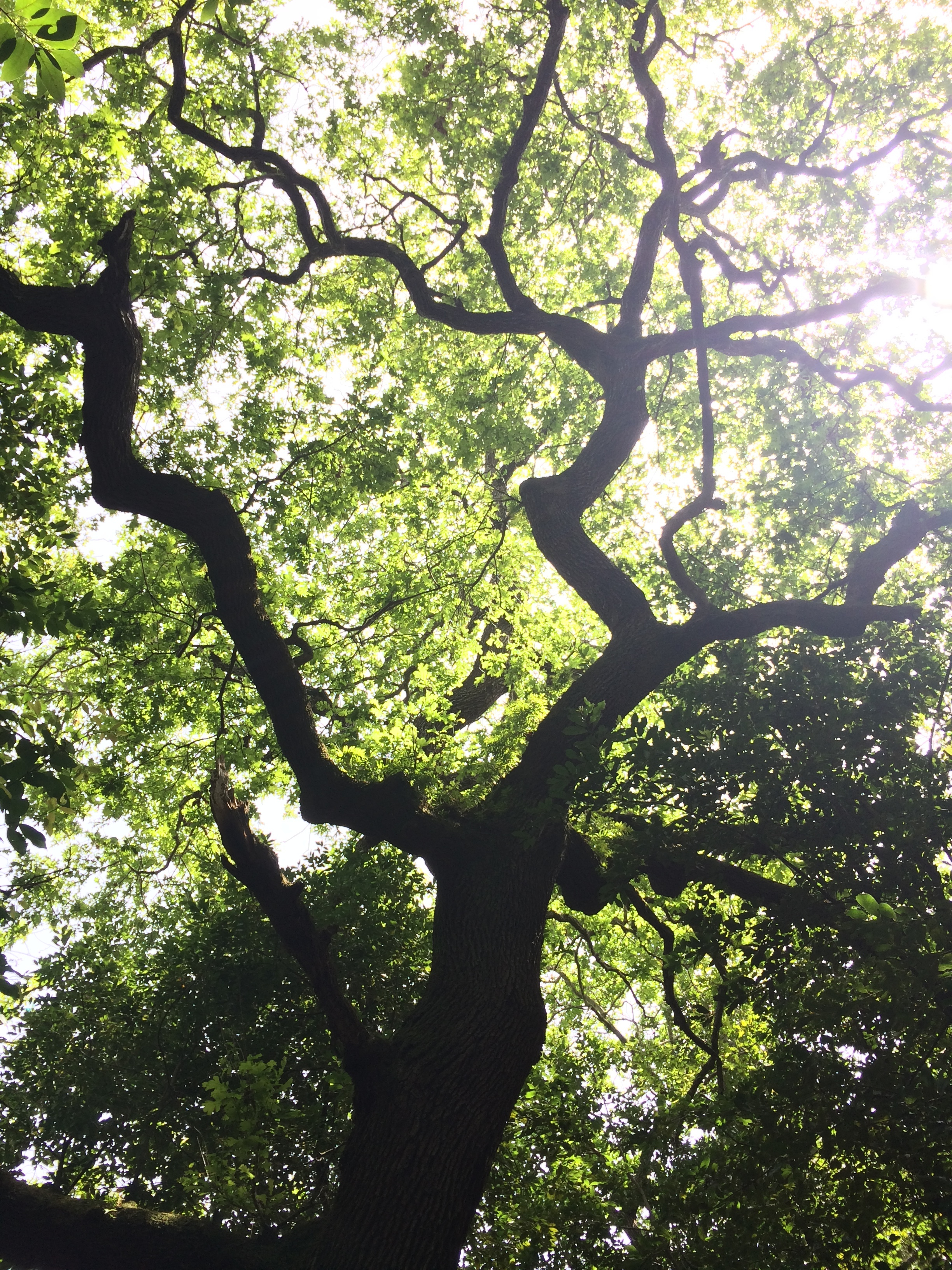 Myös luonto ja puut olivat kasvaneet alueella todella isoiksi, mikä toi toivomaa varjoa helteillä. Kuva: Mirva Rannisto